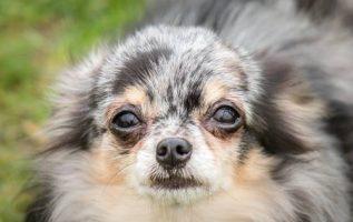 Pet Buddies Pet Care | Pet Specialty Services | 33543 3