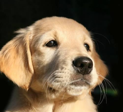 Hoboken Dog Wash | Pet Grooming | 07030 | Hoboken | 1