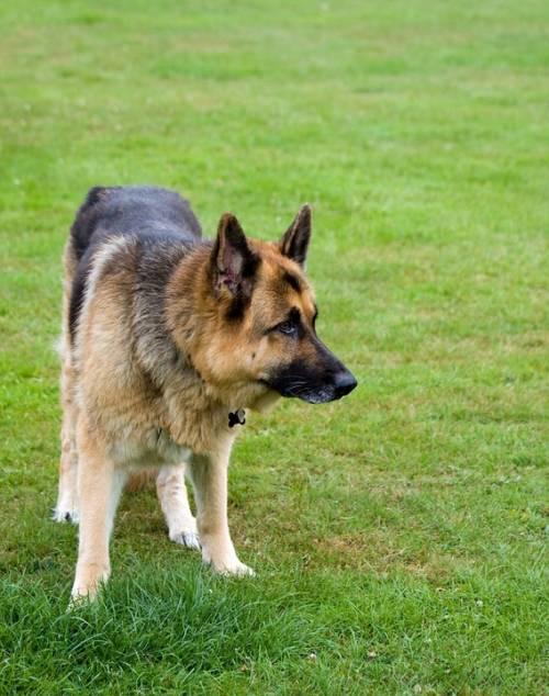 Grooming All Pets | Pet Grooming | 10028 | New York | 1