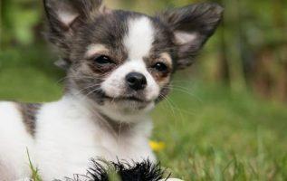 Rodriguez Mobile Pet Grooming |  | 4
