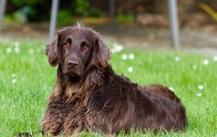 Pet Accessory.com Exlusive | Pet Grooming | 07901 | Summit | 4