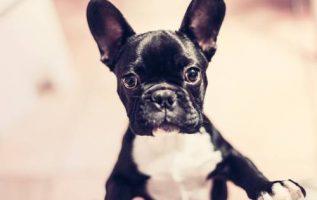PetSmart Norcross | Pet Stores | 30092 4
