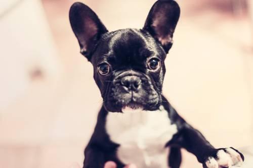 PetSmart Norcross   Pet Stores   30092 1