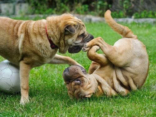 Lilly & Bobby | Pet Grooming | 11373 | Elmhurst | 1