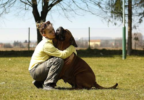 Chaya Hounds | Pet Grooming | 21207 1