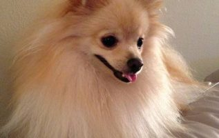 Hillendale Shopping Ctr | Pet Grooming | 21286 4