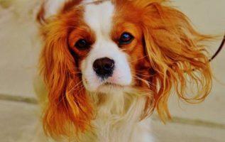 Pet Care Extraordinaire | Pet Grooming | 21234 4