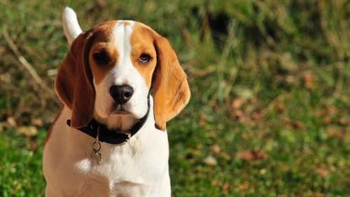Gateway Animal Hospital | Veterinary Clinics & Hospitals | 91204 | Tropico 1