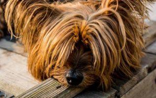 At Home Dog Grooming | Pet Grooming | 3