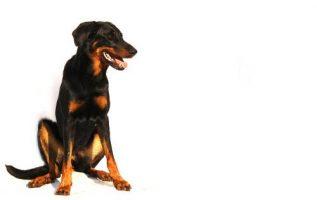 Dana's Dog Salon | Pet Grooming | 21234 3