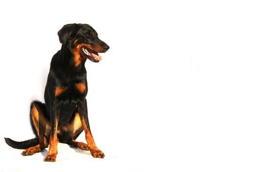 Dana's Dog Salon | Pet Grooming | 21234 1