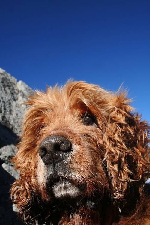 Kathy's Dog Grooming Salon | Pet Grooming | 21222 1