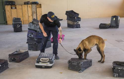 VCA California Animal Hospital Vete | Veterinary Information & Referral Services | 90025 | West LA 1
