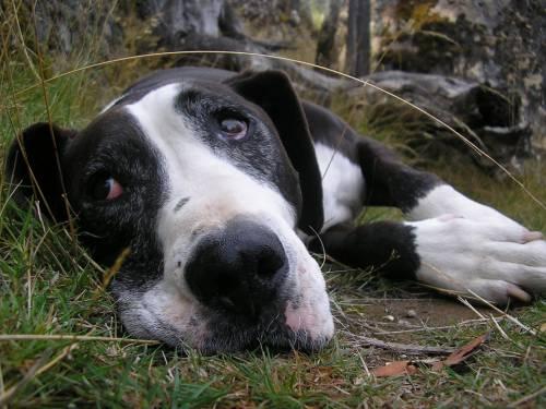 Dundalk Animal Hospital   Pet Grooming   21222 1