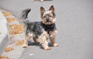 Catts & Doggs Pet Boutique | Dog & Cat Grooming & Supplies | 90027 | Silver Lake 4