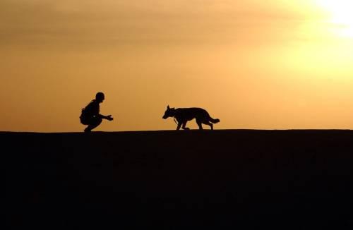 Doggie Goddess Pet Services | Dog & Cat Furnishings & Supplies | 90036 | 1