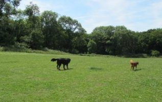 Londoloza Dog Den and Cattery | Dog Training | 90232 | McManus 4