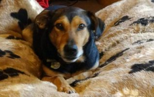 SF Hound Lounge Dog Daycare & Self Serve Dog Bath | Pet Grooming | 94110 4
