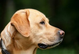 Dog Lovers | Dog Training | | 3