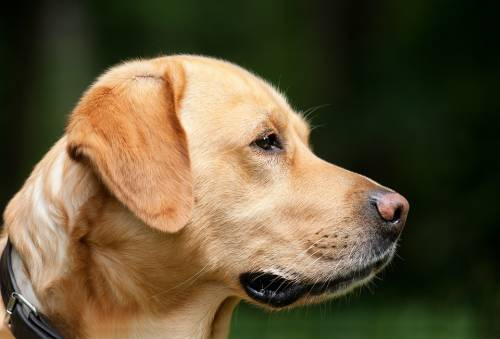 Dog Lovers | Dog Training |  | 1