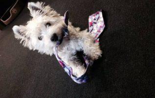 Beauty & The Beasts Pet Grooming | Pet Grooming | 94116 4